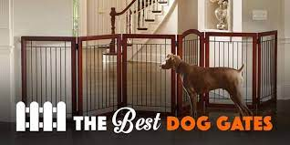 Best Dog Gates for the House
